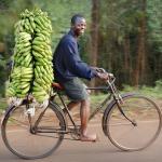 Malawi, le livreur de bananes.