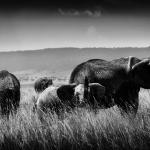Réserve nationale du Masai Mara est une réserve nationale située au sud-ouest du Kenya.