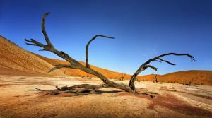 Dead Vlei est une cuvette d'argile blanche située près du célèbre salar de Sossusvlei, dans le désert de Namib, en Namibie. Son nom est aussi écrit DeadVlei ou Deadvlei et signifie: le marais mort . Namibia ©Patrick Galibert photographe