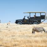 Le parc d'Etosha est une étape incontournable lors d'un safari en Namibie