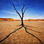 Sossusvlei est un désert de sel et d'argile dans le désert du Namib, se trouvant dans le parc de Namib Naukluft en Namibie.