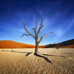 Namibie-4426-©P.Galibert