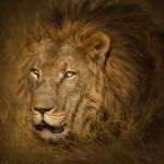 Botswana-0103-©P.Galibert