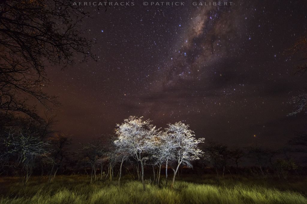 Light painting in the bush, Namibia
