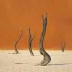 Deadvlei, Namibia galibert patrick;Patrick Galibert